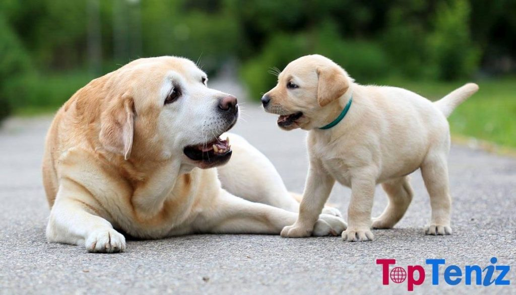 Dogs Top 10 Smartest Animals in the World