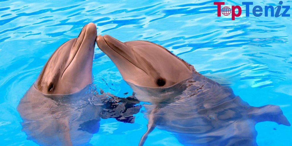 Dolphins Top 10 Most Intelligent Animals in the World