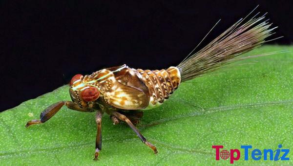 The Planthopper Nymph