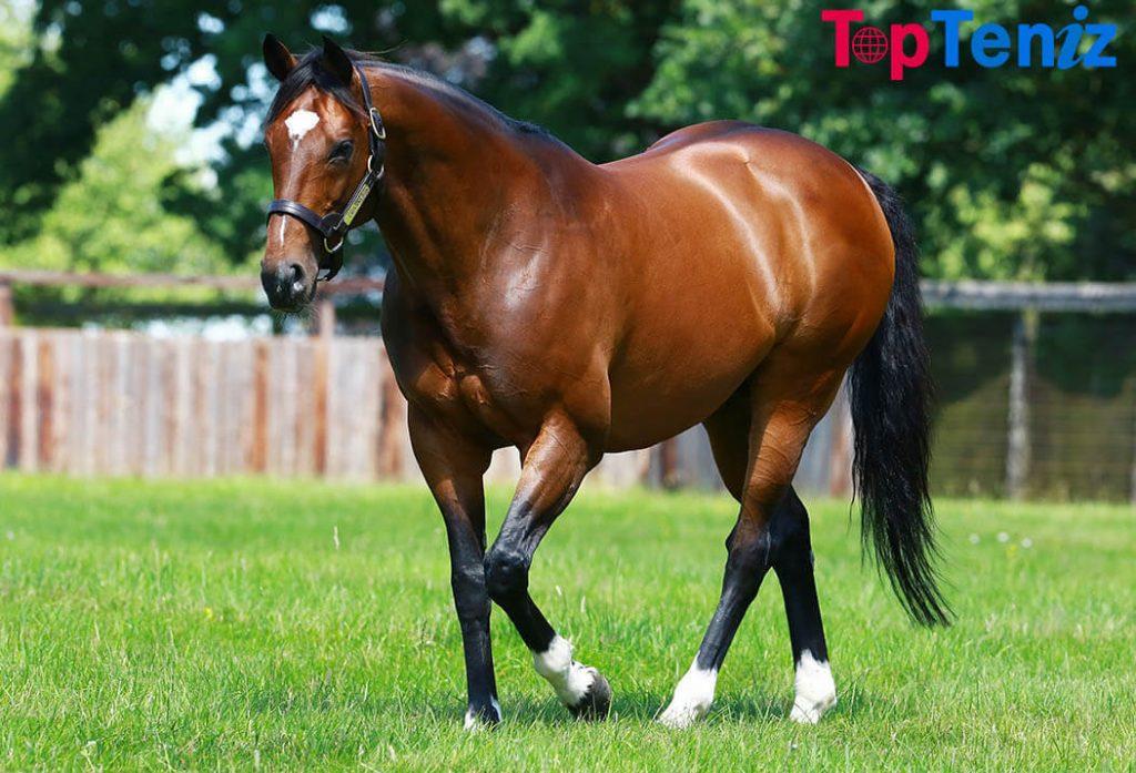 Frankel Top 10 Best Race Horses Ever